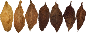 comparison-of-cigar-wrappers